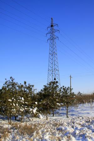 energia electrica: Torre de energ�a el�ctrica y los �rboles en la nieve, primer plano de la foto