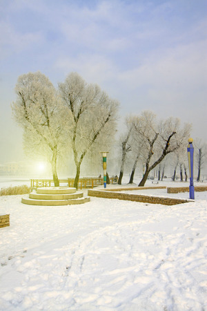 dazzle: snow-covered landscape in a park, closeup of photo