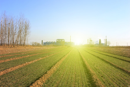 winter wheat: Winter wheat fields and factories, in rural