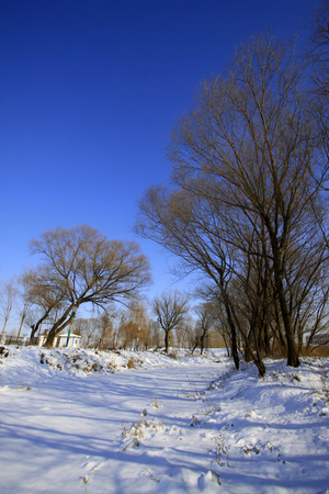 wider: natural scenery of trees in the snow