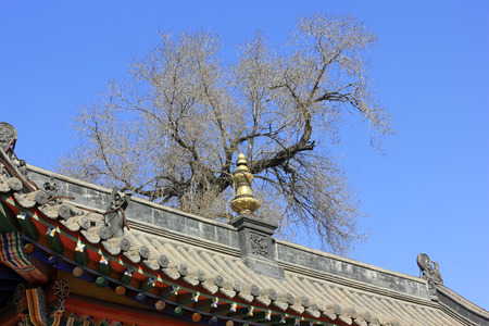 tantra: ridge and dead trees in a temple
