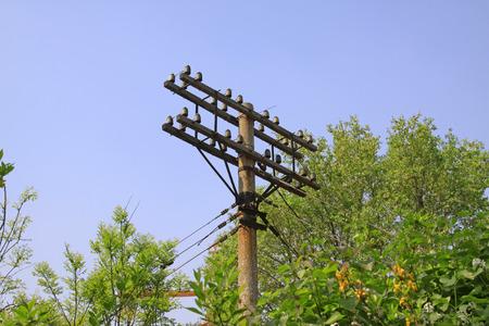 telephone poles: Telephone poles and trees, closeup of photo