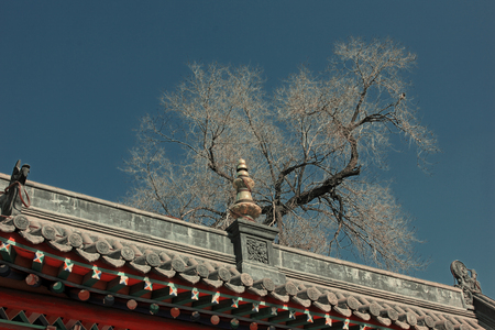 tantra: ridge and dead trees in a temple, closeup of photo
