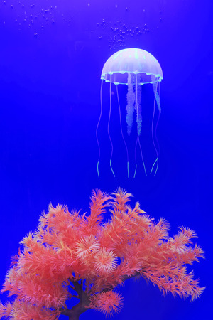 live coral: jellyfish and coral in blue background