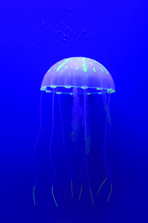 jellyfish swimming in blue background Stock Photo