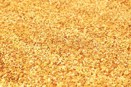 secretion: pollen grains, closeup of photo