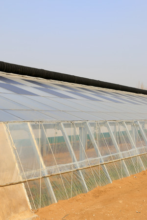 greenhouses: Solar greenhouses in a farm Editorial