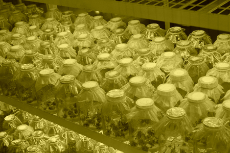 tissue culture: Tissue culture flowers in sterile room, closeup of photo Stock Photo