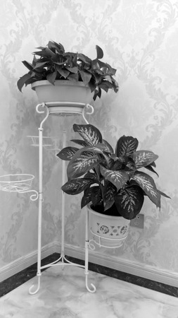 absorption: potted green plants in corner of the room, closeup of photo