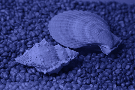 Scallops and conch in an aquarium, closeup of photo