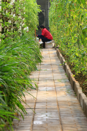 soilless cultivation: Soilless cultivation and the lady in red