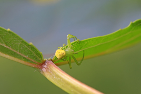 crab spider on plant in the wild