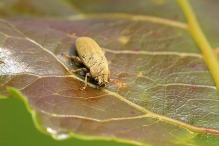 coleoptera: Insects on plant in the wild