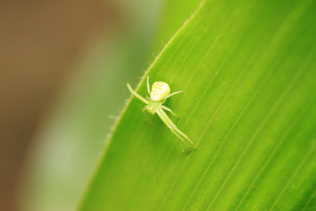 crab spider: crab spider on plant in the wild