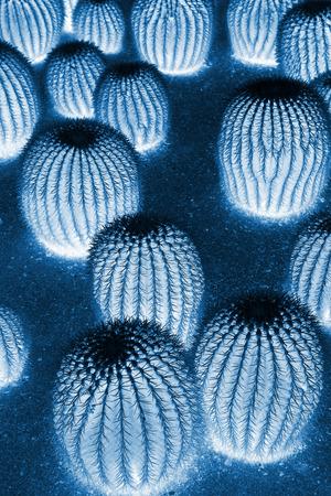 plantas del desierto: Las plantas del desierto ser celeste, primer plano de la foto Foto de archivo