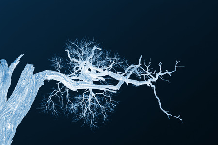 dry branches under the blue sky, closeup of photo