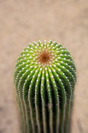 Cactaeous plants in a garden