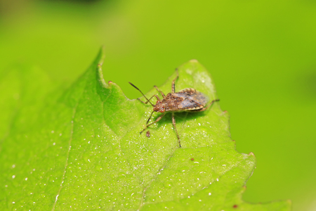 stinkbug on plant in the wild