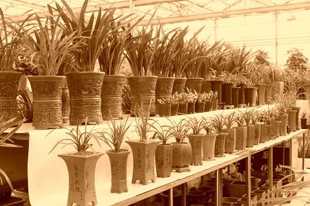 commodities: miniascape orquídeas en la tienda de flores, primer plano de la foto