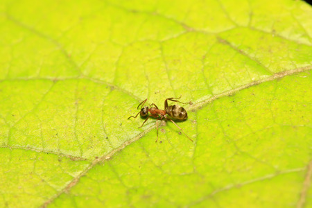 Formica fusca on plant in the wild