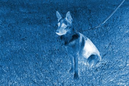 pet dog on the grass, closeup of photo