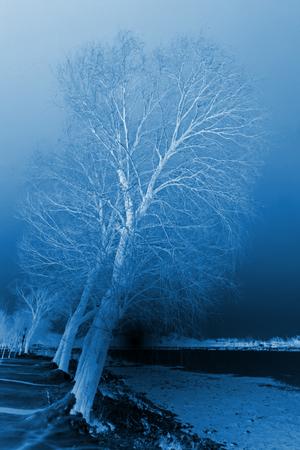 natural scenery, trees in the snow, closeup of photo