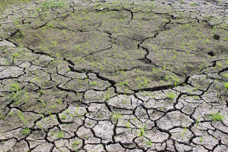 plant and parched land