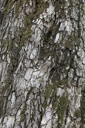 Chapped bark Stock Photo