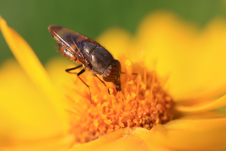 Fly insects