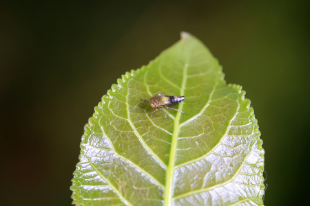 leafhopper on plant in the wild