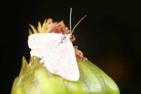 Moth Reklamní fotografie - 86921244
