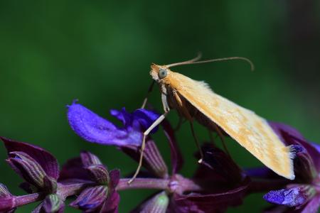 Moth on purple flower Stock Photo