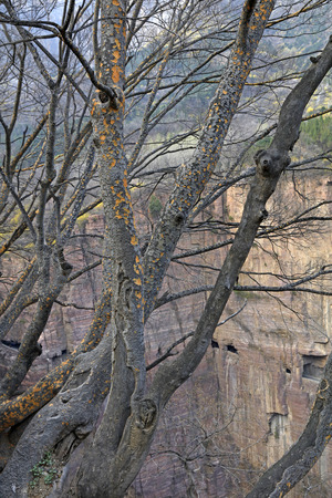 野生の黄斑のトランク 写真素材
