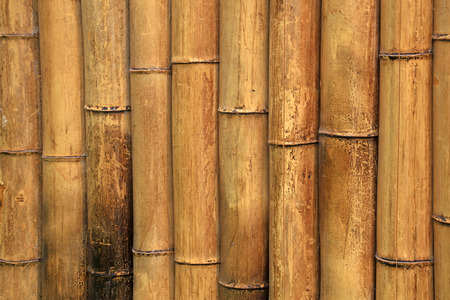 Bamboo walls in a park