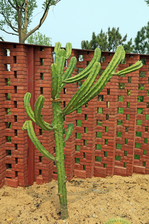 Cactus plants in the botanical garden