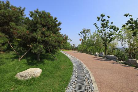 Hillside vegetation and sewers