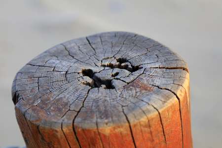 Decadent wooden pile