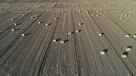 Farmers use agricultural machinery to compress rice straw and bundle them on a farm in North China