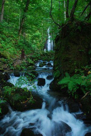 pine creek: Wallfall in Deep forest Stock Photo