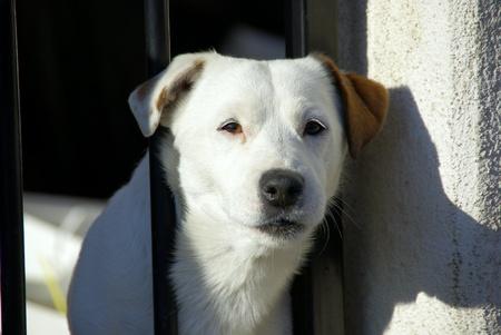 chien: Attention chien de garde  Stock Photo