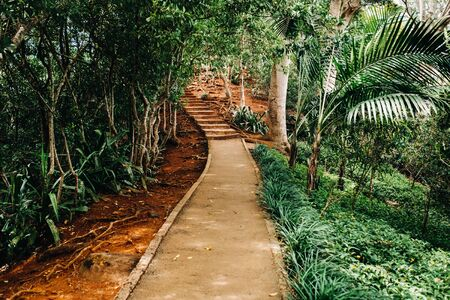 View of the path along the exotic trees of the Chamarel National Park on the island of Mauritius