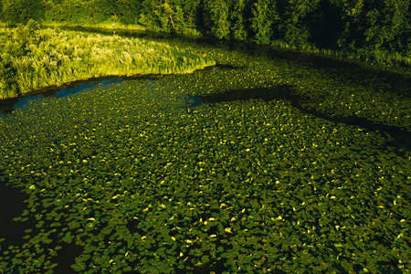 Top view of the Svisloch river in the city's Loshitsa Park with lilies at sunset.Beautiful nature of Belarus