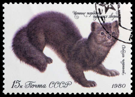 USSR - CIRCA 1980: A stamp printed in the USSR shows Fur sable black, circa 1980