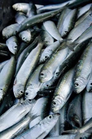 fish vendor: sardine