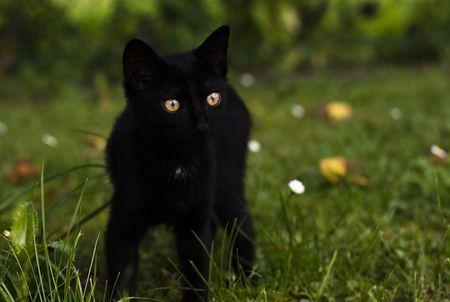 Cat Zdjęcie Seryjne - 5524629