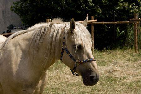 Horse Zdjęcie Seryjne - 5524652