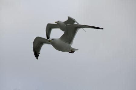 Flying Zdjęcie Seryjne - 5524633
