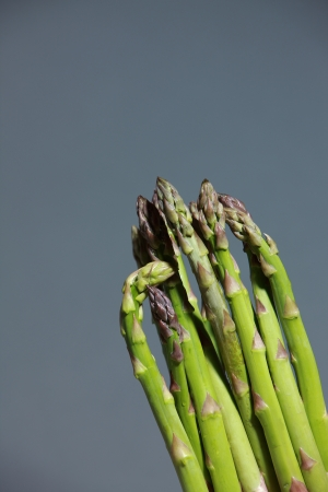 Bunch of fresh green asparagus spears to be used as an ingredient in cooking isolated on grey Zdjęcie Seryjne