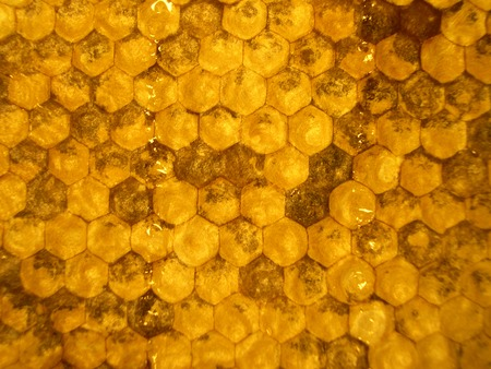 goldish: goldish honeycombs with the sweet tasty honey