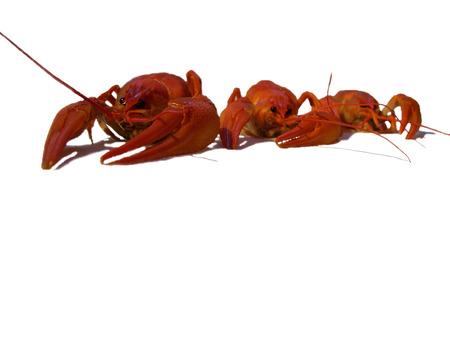 Three big red crayfish on the white backround